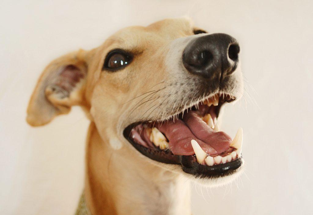 5 Best Dental Dog Treats For Clean Teeth 2018 [Hygiene Chews]