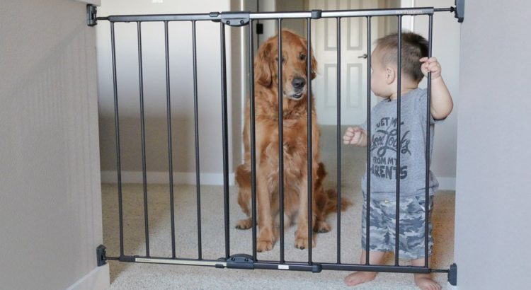 best dog gate for the house