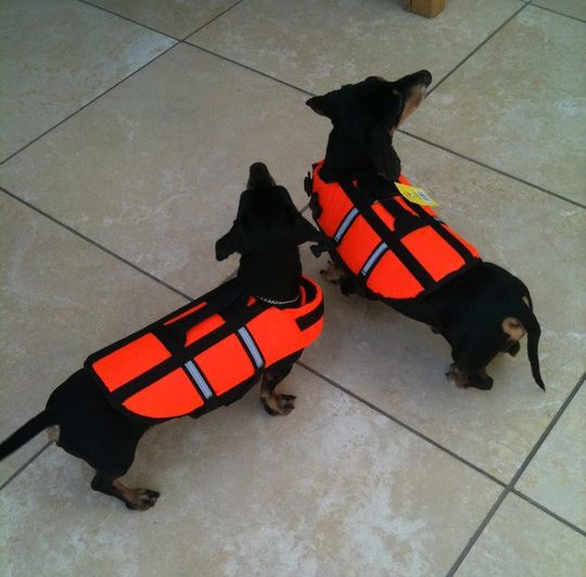 best dfd life vest for dogs