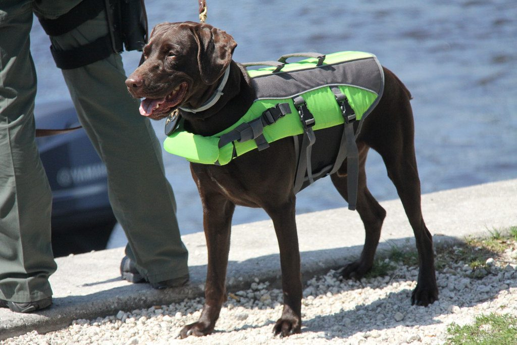 life vest for dogs safety in water