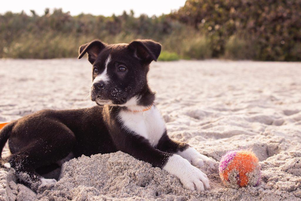 dog moisturizer for paws
