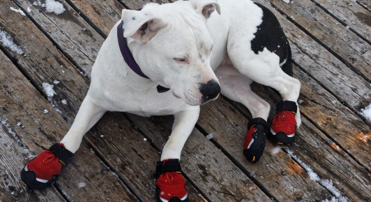 best dog shoes for protection