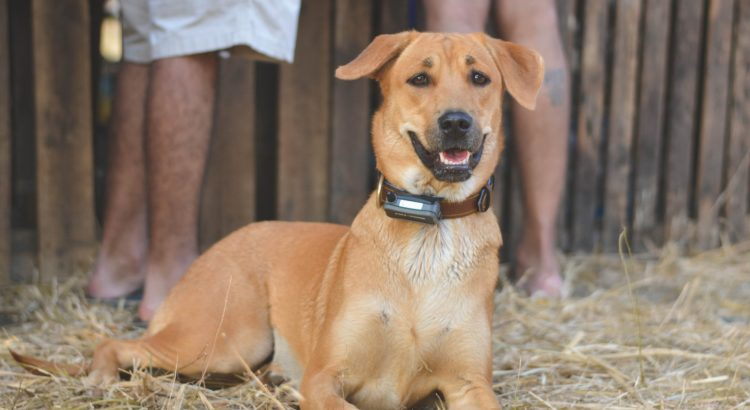 best training collar for dogs