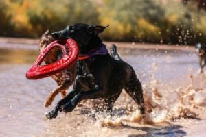 best tough dog toys for chewers