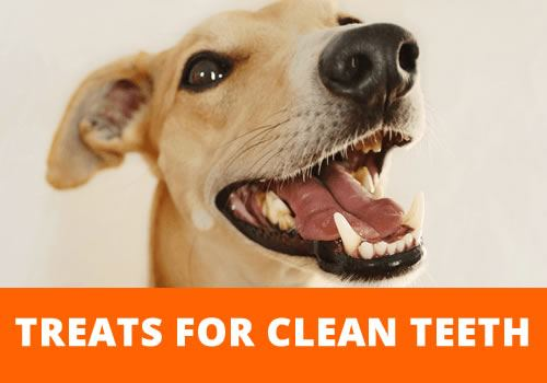 cleaning teeth dog treats