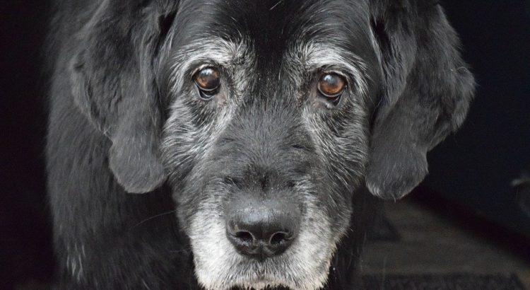 paw and nasal Hyperkeratosis