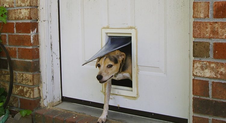Best Electronic Dog Door