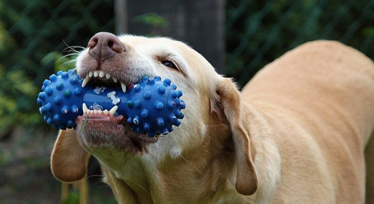 chew toys for teething puppies