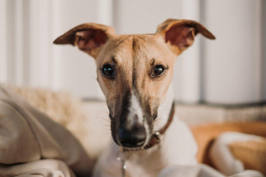 The Best Dog Ear Cleaner 2019 Aloe Eucalyptus
