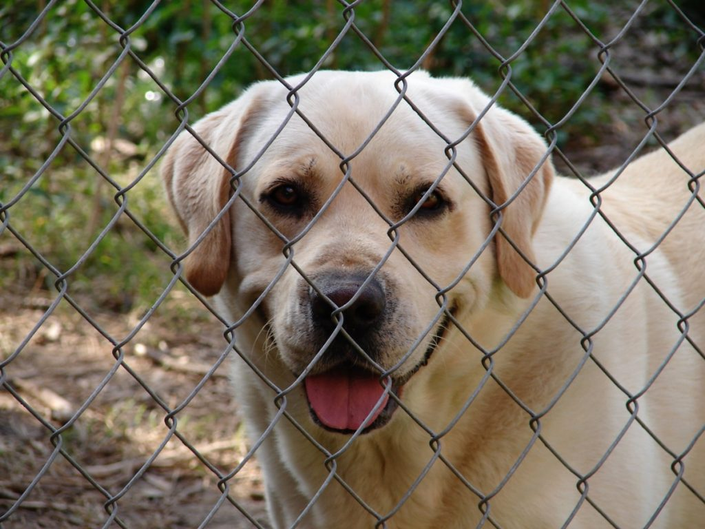 home dog kennel