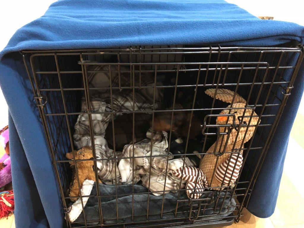 puppy crates