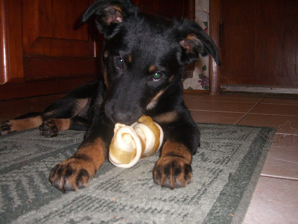 dog rawhide bones facts