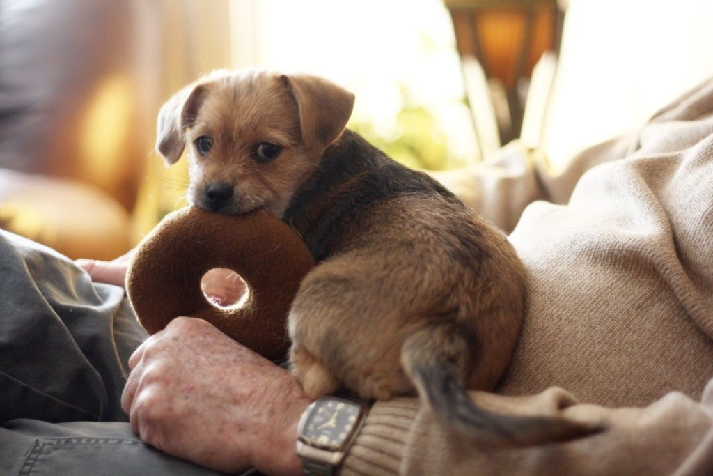 puppy toys for teething