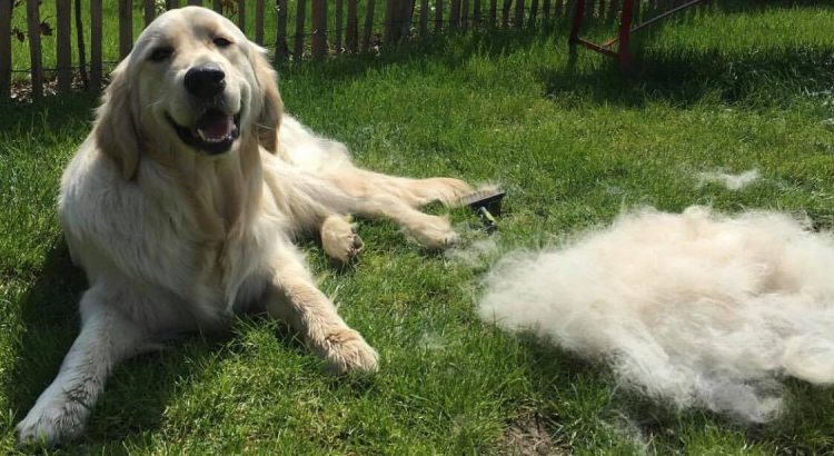 Dog Deshedding Tool
