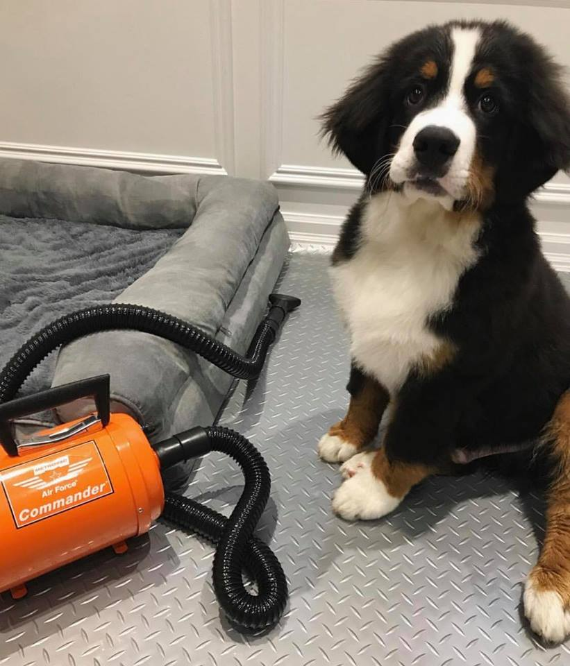 Best Dog Dryer 2019 Hair Grooming For Professionals