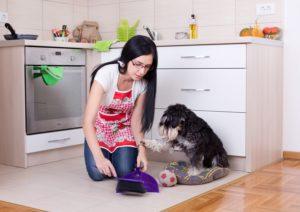 Dog Foods for Less Poop