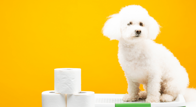 DOg Foods for Less Poop