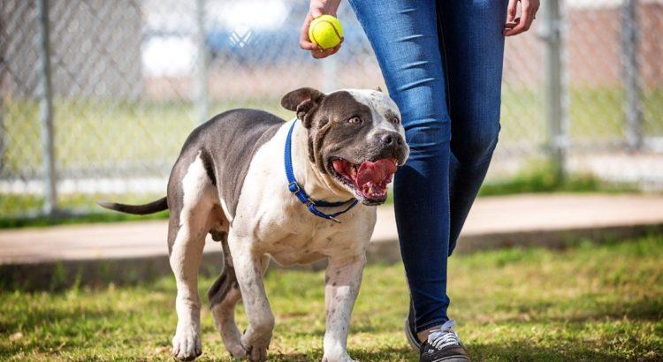 Off Leash Dog Training