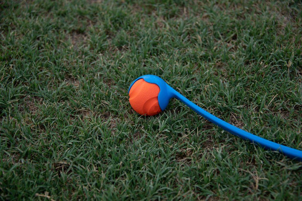 dog ball launcher