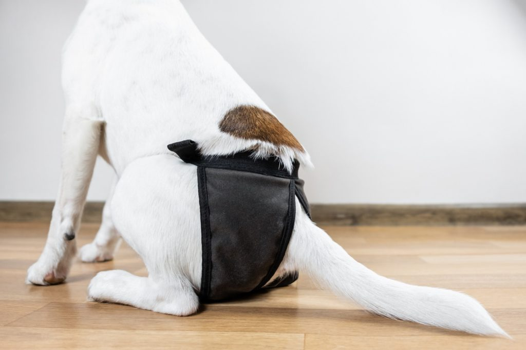 Dog Diapers